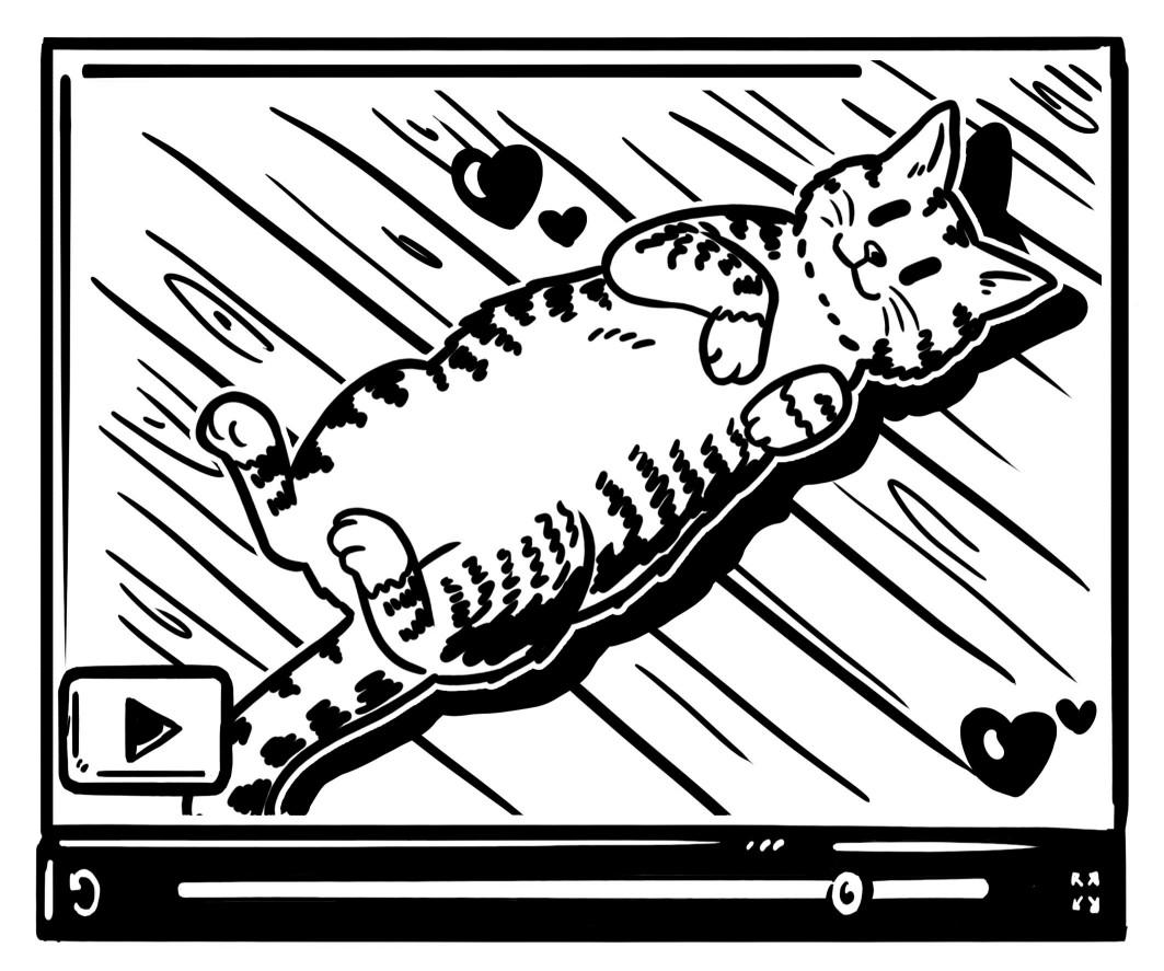 03_cat_video